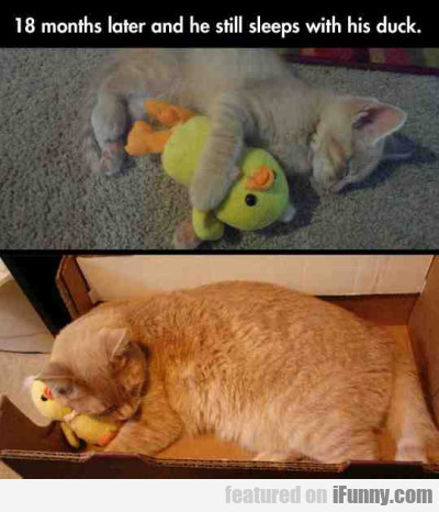 18 Months Later And She Still Sleeps With His Duck