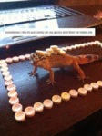 Sometimes I Like To Put Candy On My Gecko...