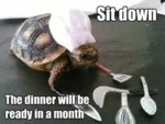 Sit Down, The Dinner Will Be Ready In A Month...