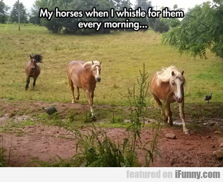 My Horses When I Whistle For Them Every Morning