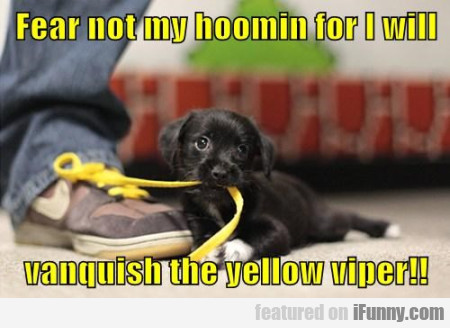 Fear Not My Hoomin For I Will...