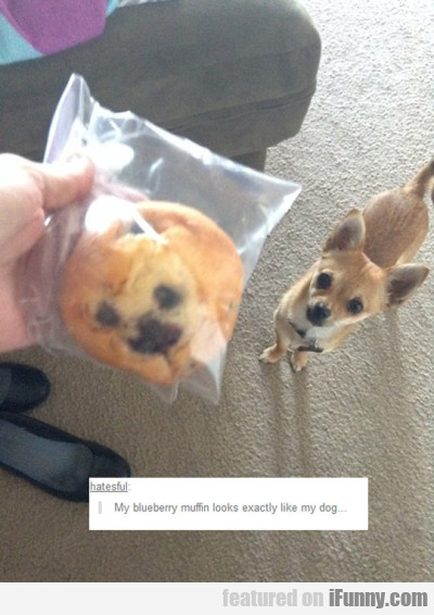 My Blueberry Muffin Looks Exactly Like My Dog