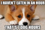 I Haven't Eaten In An Hour - That's 7 Dog Hours