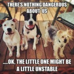 There's Nothing Dangerous About Us...