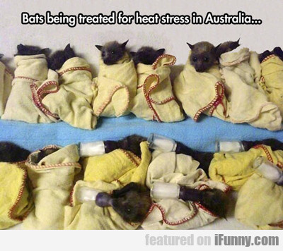 Bats Being Treated For Heat Stress In Australia...