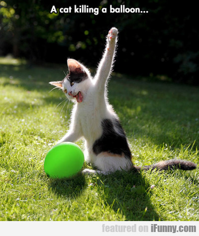 A Cat Killing A Balloon...