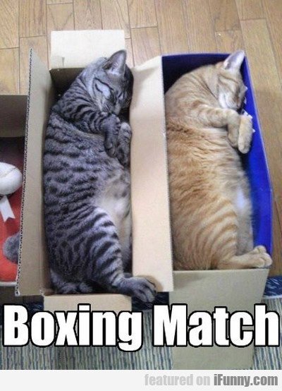 Boxing Match