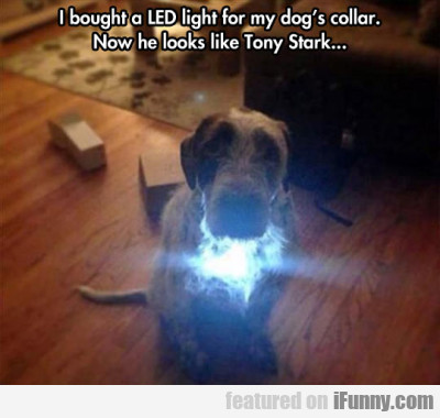 I Bought A Led Light For My Dog's Collar...