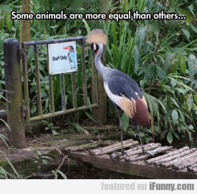 Some Animals Are More Equal Than Others