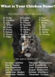 What Is Your Chicken Name?
