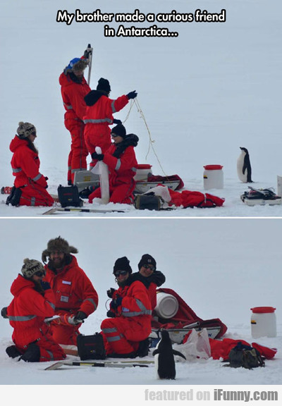 My Brother Made A Curious Friend In Antarctica...