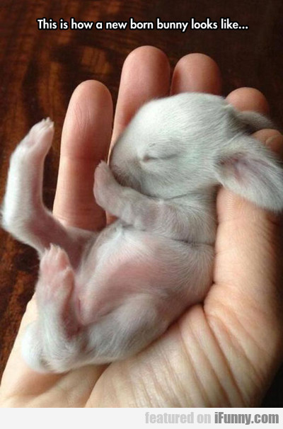 This Is How A Newborn Bunny Looks...
