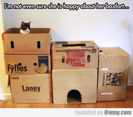 I am not even sure she is happy about her boxfort