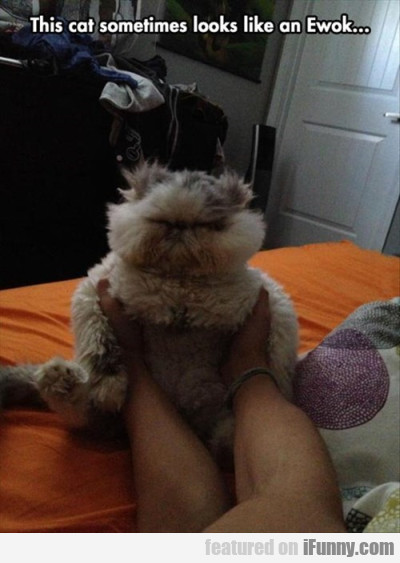 This Cat Sometimes Looks Like An Ewok.