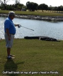 Golf Ball Lands On Top Of Gator's Head...