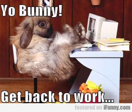 Yo Bunny! Get Back To Work