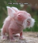 If Mr. Miyagi Was A Rabbit...