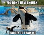 You Don't Have Enough Badgesto Train Me
