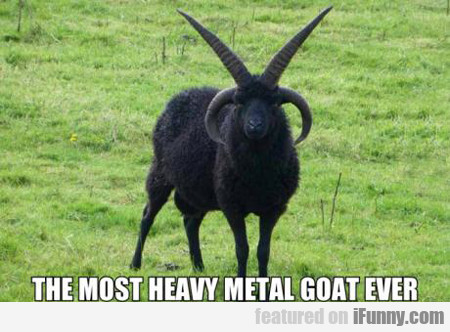 The Most Heavy Metal Goat Ever...