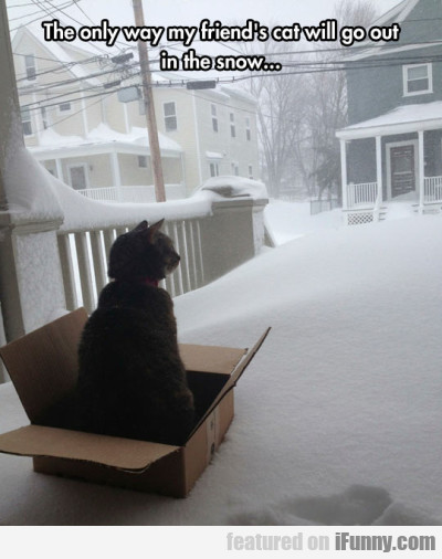 The Only Way My Friend's Cat Will Go Out In The...
