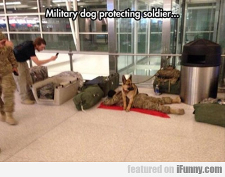 Military Dog Protecting Soldier..