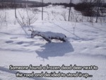 Someone Found A Frozen Dead Deer...