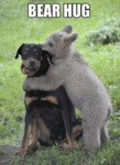 Bear Hug Time