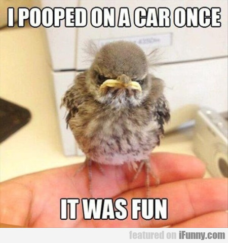 i pooped on a car once it was fun