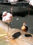 What Do You Mean I Am Not A Flamingo?