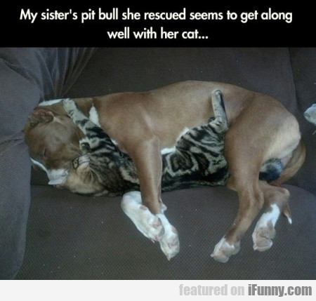 My Sister's Pit Bull She Rescued