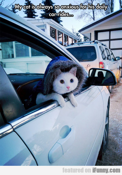 My Cat Is Always So Anxious For His Daily Car..