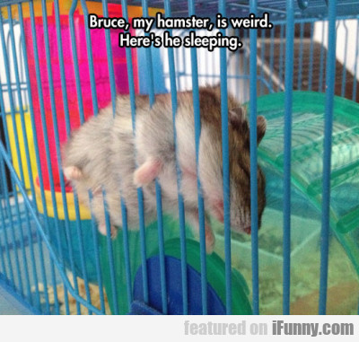 Bruce, My Hamster Is Weird. Here's He Sleeping