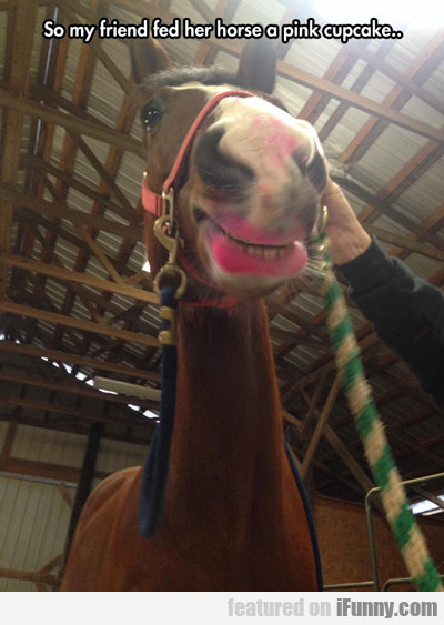 so my friend fed her horse a pink cupcake...