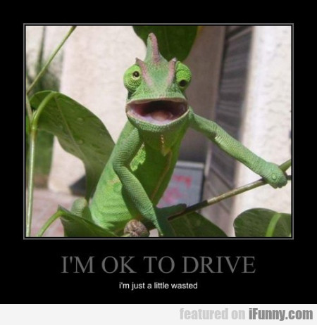 i'm ok to drive i'm just a little wasted