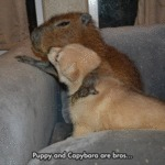 Puppy And Capybara Are Bros