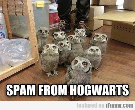 spam from hogwarts...