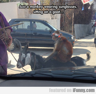 Just A Monkey Wearing Sunglasses, Sitting On A...