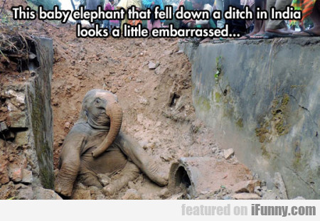 This Baby Elephant That Fell Down A Ditch In...