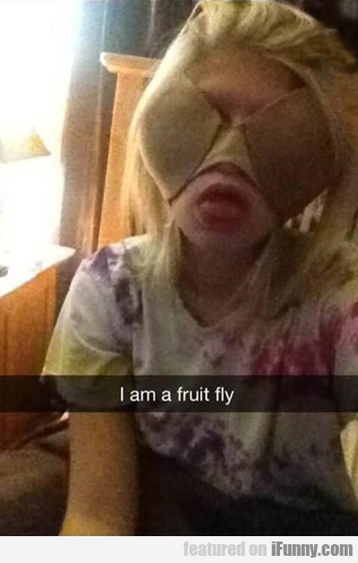 I Am A Fruit Fly...