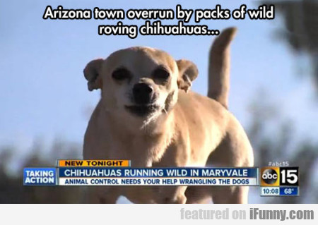 Arizona Town Overrun By Packs Of Wild Roving...