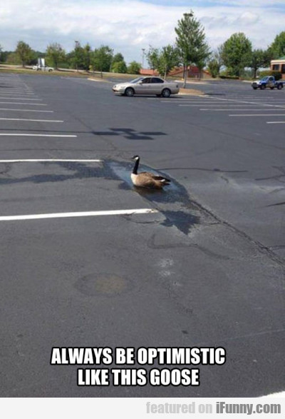 Always Be Optimistic Like This Goose