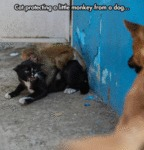 Cat Protecting A Little Monkey From A Dog...