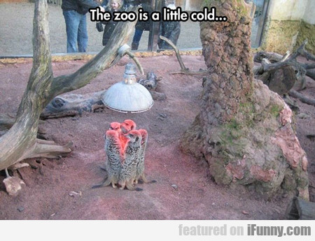 the zoo is a little cold...