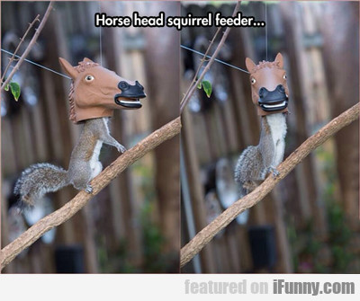 Horse Head Squirrel Feeder...