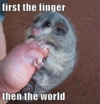 First The Finger, Then The World