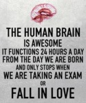 The Human Brain Is Awesome