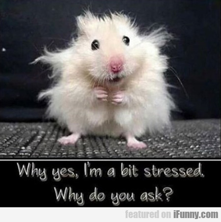Why Yes, I'm A Bit Stressed