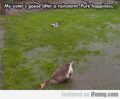 my sister's goose after a rainstorm...