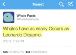 Whales Have As Many Oscars As Leonardo
