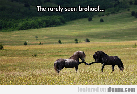 The Rarely Seen Brohoof...